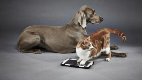 Google Lens: l'app che riconosce anche la razza degli animali – Ultima Voce (Blog)