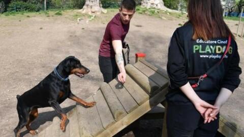 Giardini Montanelli, tunnel e slalom in area cani: apre 'Mobility Dog … – Il Giorno