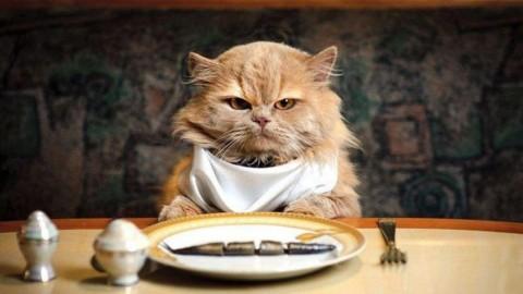 I gatti hanno bisogno di mangiare le bacche di Goji? – Il Cambiamento