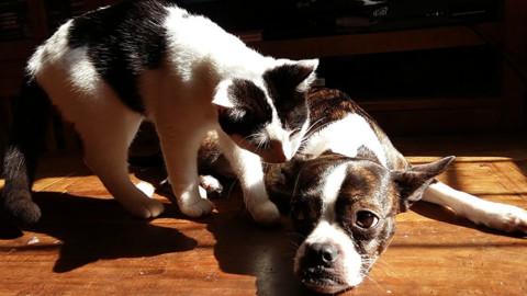 Arriva l'ok per sotterrare in terreni privati gli animali domestici – Il Nuovo Terraglio (Comunicati Stampa)