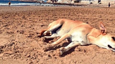 Marocco, massacro di cani randagi per la visita degli ispettori Fifa in … – Il Fatto Quotidiano