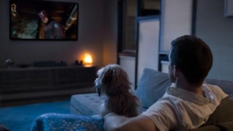 Gli animali domestici sono i partner ideali per guardare i propri show … – Oggi