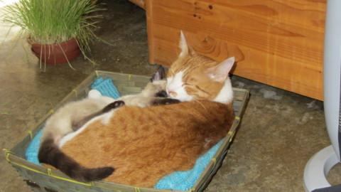 Oscar e Arthur, la storia di due gattini e della loro casa piena di amore – Petpassion.tv