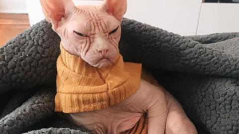 Loki, ecco il gatto più arrabbiato del mondo [FOTO] – Velvet Pets