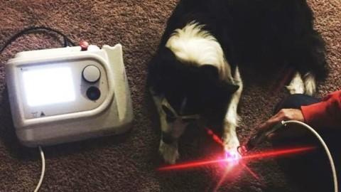 Laser, onde elettromagnetiche, luce pulsante: anche agli animali le … – Corriere Quotidiano