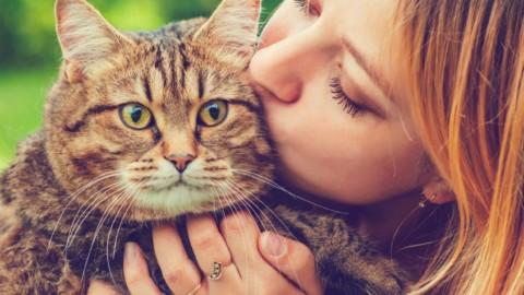 5 trucchi per farti amare dal tuo gatto – alfemminile.com