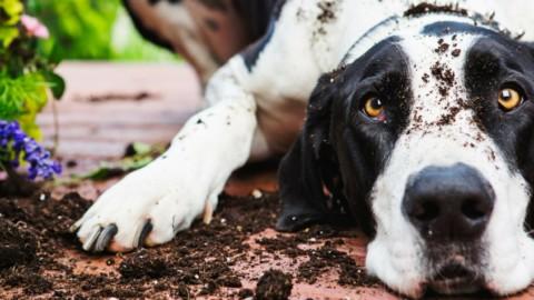 5 cose da insegnare assolutamente al tuo cane – alfemminile.com