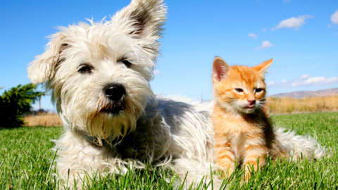 Animali da compagnia: il 32% degli italiani ha in casa un pet … – Meteo Web
