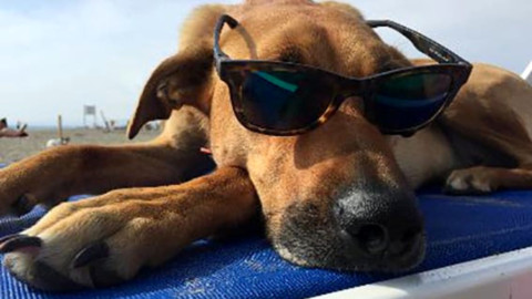 Baubeach: la prima spiaggia d'Italia per cani liberi e felici – RomaToday