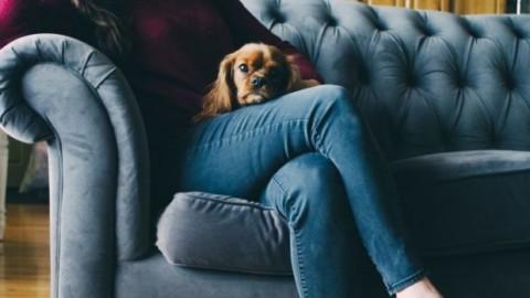 Netflix, streaming bestiale: binge watching con gli animali domestici – ZON.it