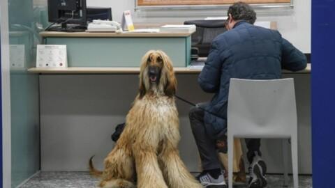 In banca a quattro zampe: arriva il conto corrente per cani e gatti – Milleunadonna.it