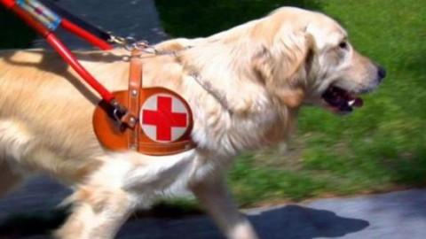 """Sardegna, cacciato il cane guida di un cieco: """"Porta allergie"""", il caso … – Casteddu on Line"""