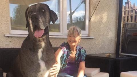 Freddy, il cane più grande del mondo – TPI