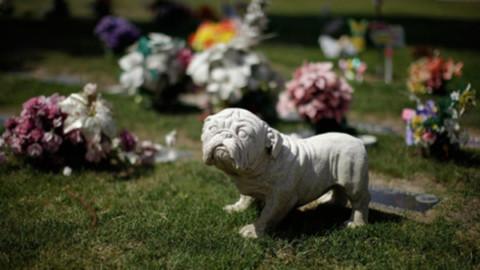 In Veneto sarà possibile seppellire cani, gatti e pets in giardino o in … – Il Sole 24 Ore