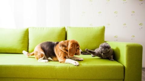 Condominio: quanti animali domestici è possibile tenere in … – Studio Cataldi