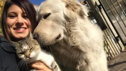 """Trentino, torna a casa il cane che abbaiava troppo (ma in """"libertà … – Il Sole 24 Ore"""