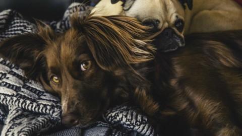 Andresti a letto con il tuo migliore amico? – Vanity Fair.it