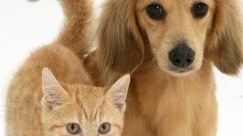 Cani e gatti nel lettone, così vivono più a lungo – Il Cittadino di Monza e Brianza