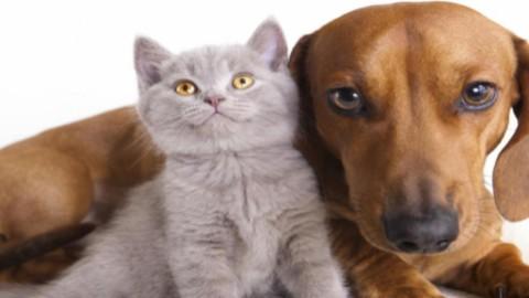 Banca di Piacenza: arriva il primo conto corrente per gli animali … – Blasting News