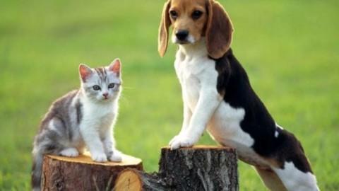 """""""Atto d'attenzione"""": sarà possibile seppellire gli animali domestici nei … – VeneziaToday"""