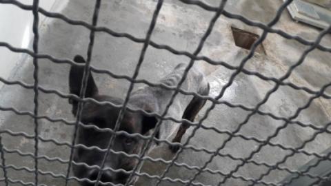 Cani e separazione: entra in canile e ruba il suo cane. L'ex lo aveva … – www.amoreaquattrozampe.it (Blog)