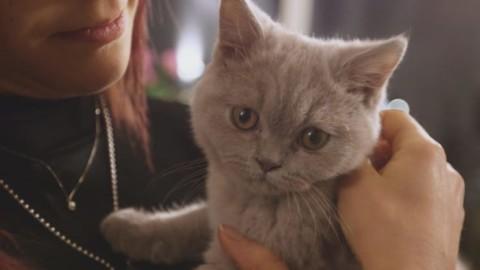 Matrimonio a Prima Vista 3, come gli animali domestici influenzano … – Sky Tg24