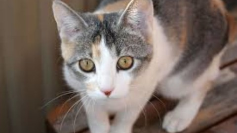 A Verbania esposizione Internazionale Felina – Sempione News (Comunicati Stampa) (Blog)