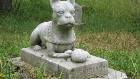 In Veneto ok a sepoltura animali da compagnia in giardino – ANSA.it