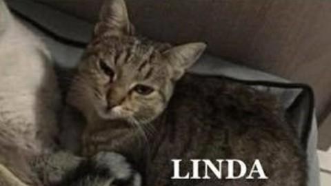 Esplosione Rescaldina, trovato gatto di uno dei sopravvissuti – Settegiorni