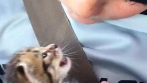 Un bambino di 10 anni riesce a calmare una gatto abbandonato che … – Il Secolo XIX