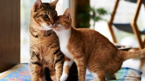 """Inaugurazione mostra """"I Gatti del cuore"""": il 13 aprile al Crazy Cat Café – MilanoToday"""