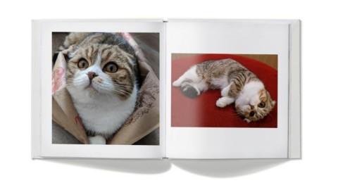 Google Lens: ora riconosce le razze di cani e gatti – Tech Station