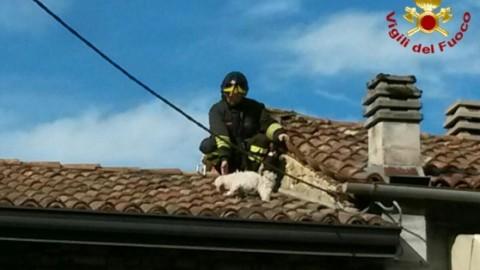 Insegue un gatto e finisce sul tetto, cagnolino salvato dai vigili del … – Gazzetta di Reggio