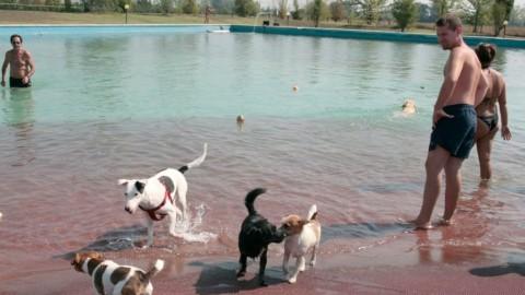 Dal 1° maggio apre la piscina per i cani – La Sentinella del Canavese