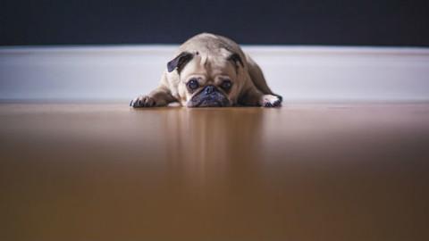 Cani: 5 modi per proteggere il cuore – GreenStyle