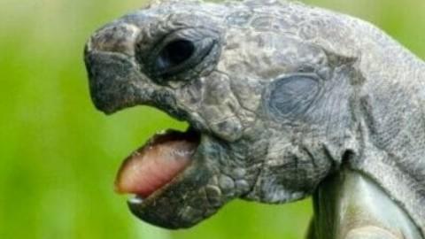 Tutto sulla tartaruga, simbolo della longevità e della lentezza – TuttoGreen