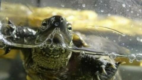 Tutto sulla tartaruga d'acqua: le diverse specie e le regole per … – TuttoGreen