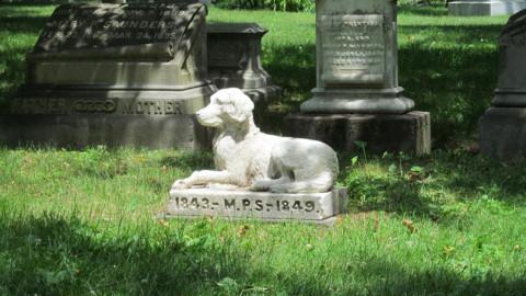 In Veneto è legale seppellire il proprio animale da compagnia in … – LifeGate