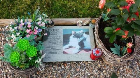 Anche in Veneto approvati i cimiteri per gli animali da compagnia – VicenzaToday