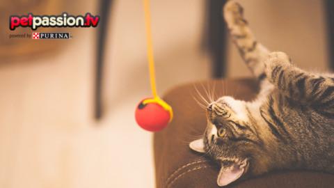 I 5 giochi preferiti dai gatti – Petpassion.tv