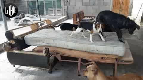 """""""Accudisco da sola 100 cani randagi a Gela, aiutatemi""""   VIDEO – LE IENE"""