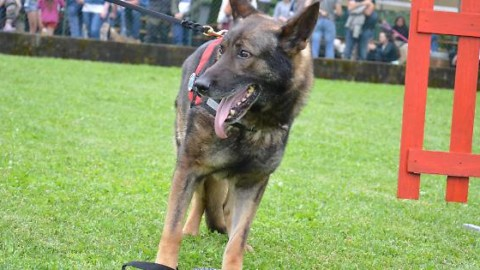 """""""Dog party"""" torna la festa con i cani – Gazzetta di Parma"""