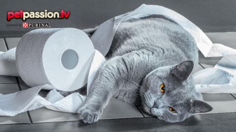 Guai e marachelle dei gatti – Petpassion.tv