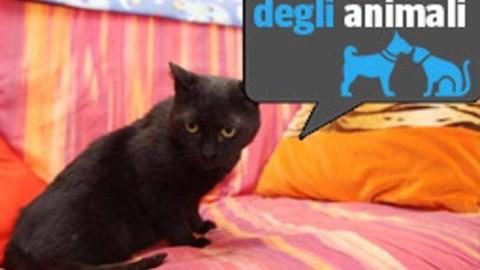 Un'«adozione del cuore» per Mia, la gatta anziana e malata arrivata … – Corriere della Sera