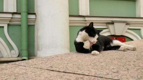 A San Pietroburgo festa dedicata ai gatti dell'Ermitage – Sputnik Italia