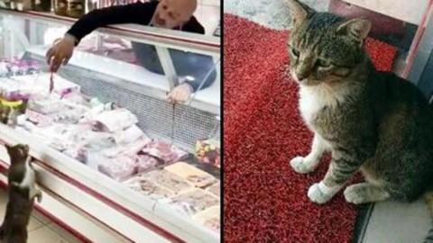 Il gatto amico del macellaio turco – La Stampa