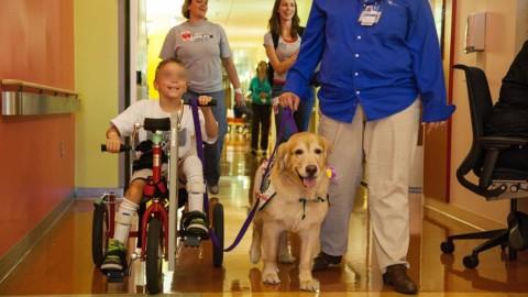 """""""I cani da pet therapy negli ospedali non sono stressati, anzi si … – Il Secolo XIX"""