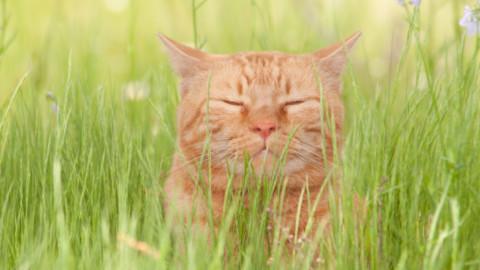 Come capire se il tuo gatto è felice – Vanity Fair.it