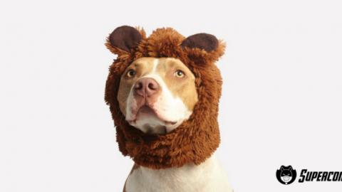 Come funziona l'assicurazione cane e gatti – Supercoin.it (Blog)