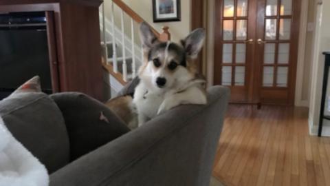 Cani disastrosi: la reazione di un cane dopo aver distrutto casa – www.amoreaquattrozampe.it (Blog)